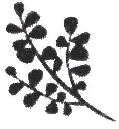 nora_logo_3_1