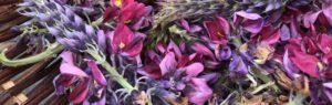 slide_flower